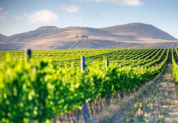General-Winelands