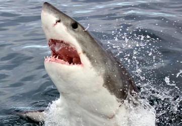 shark-diving-package