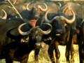 22 Day Dar es Salaam to Kruger Overland Tour