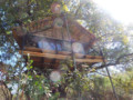 4 Day Kruger Park and Tree House Experience