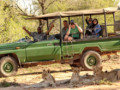 5 Day Kruger Park and Tree House Experience