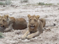 6 Days of Dunes and Safaris