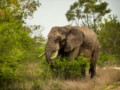7 Days of Kruger and Swaziland Overland Tour