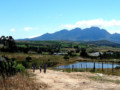 Cycling the Winelands
