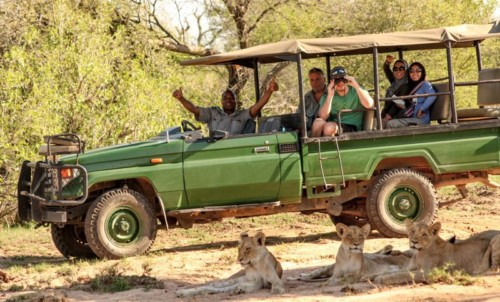 safari truck and lions