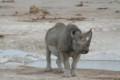 A Rhino near the waterhole