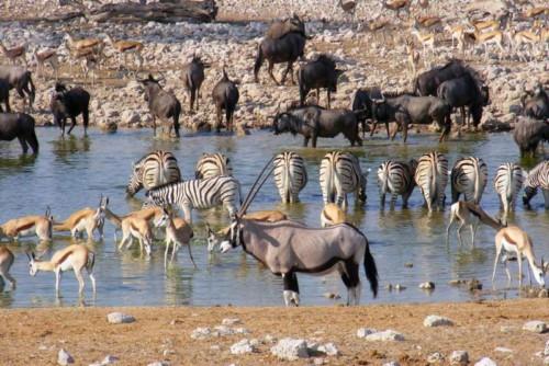Animals enjoying some water at the waterhole