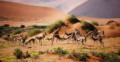 Springboks in th desert