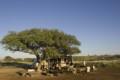Overland truck camp under tree