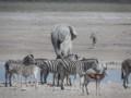 Animals at a Etosha Waterhole
