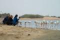 walvis bay birds