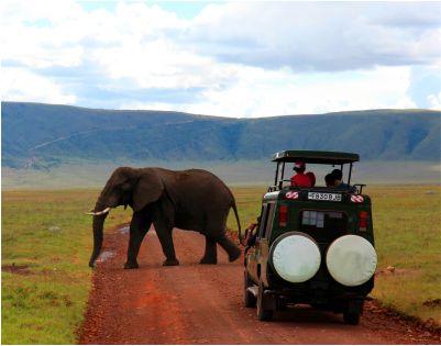elephant and car