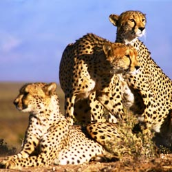 Budget Tours | Africa Tour Packages, Trips & Safaris | Ashanti Travel
