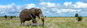South African Budget Safaris