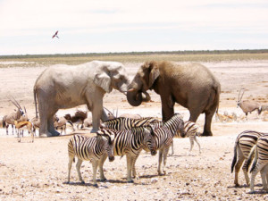19 days Cape Town to Vic Falls Overland Tour