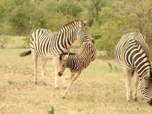 3 Day Kruger National Park Safari