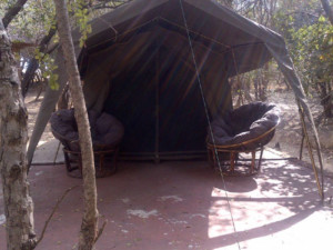 3 Day Kruger Park and Tent Experience