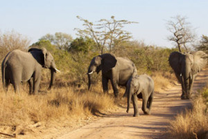 3 Day Garden Route and Addo Safari (One Way)