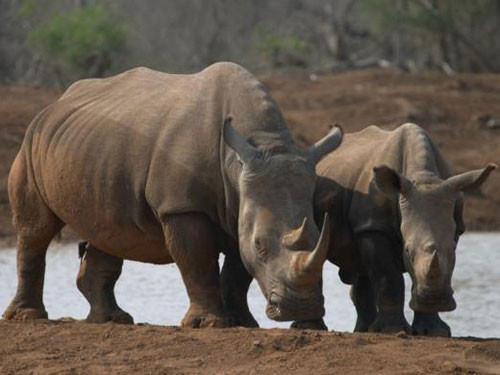 3 Day Safari and Bungy Tour