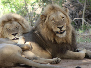 4 Day Kruger National Park Safari
