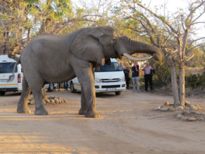 4 Day Kruger Park and Tent Experience