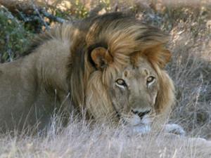 4 Day Garden Route and Addo Safari (Return)