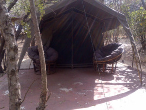 5 Day Kruger Park and Tent Experience