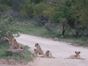 5 Day Kruger and Balule Experience