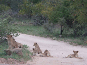 5 Day Luxury Tent and Kruger Experience