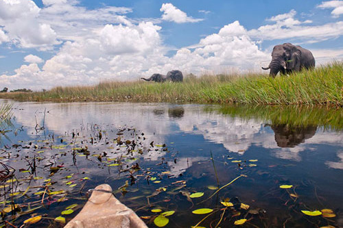 5 Day Okavango Delta and Bush Safari