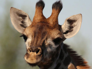 6 Day Kruger National Park Safari