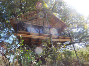 6 Day Kruger Park and Tree House Experience