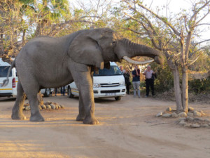 6 Day Luxury Tent and Kruger Experience