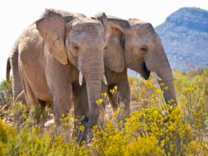 Cape Town Day Safari