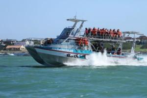 shark cage boat