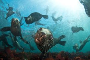 Seal Snorkelling
