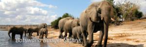 botswana budget safaris