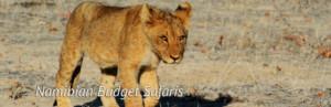 Budget Safaris- Namibia
