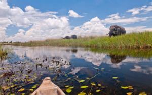 Mokoro and elephant at Okavango Delta