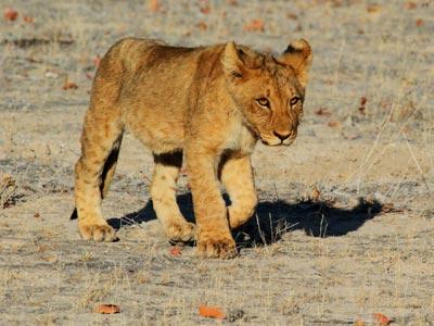 Namibia Budget Safari