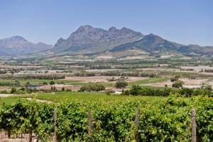 Panoramic view of wine region