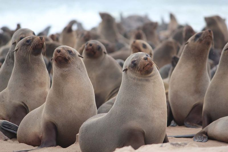 Seal Colony at Swakopund