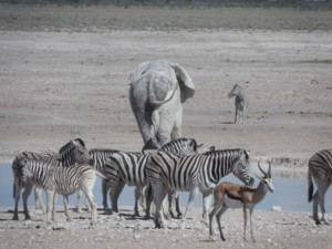 Animals at a Etosha Waterhole