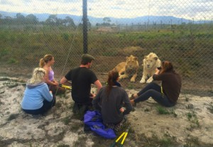 volunteers and lions