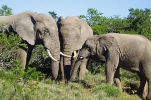 3 elephants
