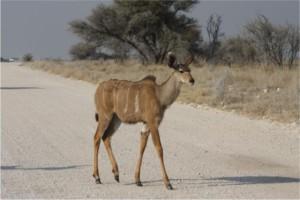 bambi kruger park
