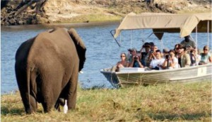 elephant and boat