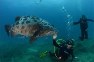 big fish and diver mozambique