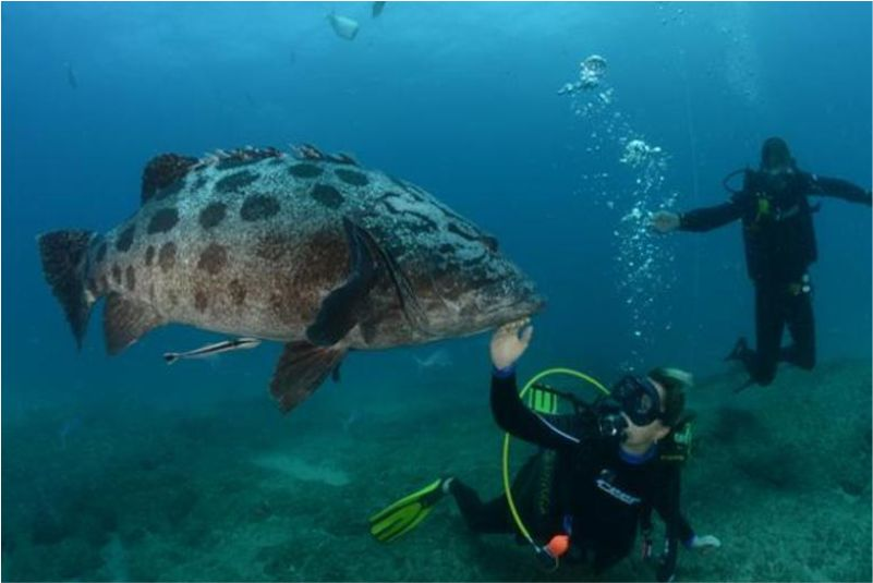 big fish and diver mozambique
