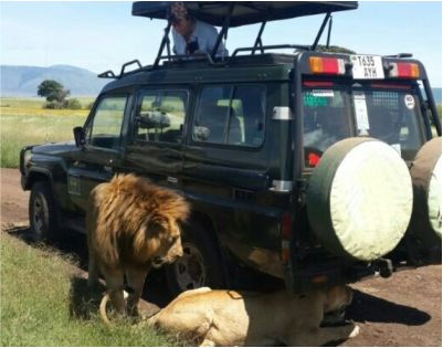 lion and car